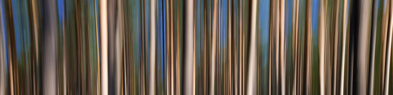morning trees by Charlie Alice Raya