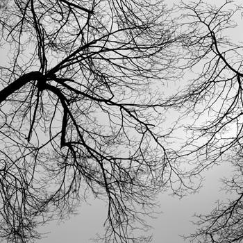 photo series, greyscale, 2010-16, by Charlie Alice Raya