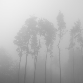fog, 2015, title image for book 6, Lewis, photo series, title images, easy town books, by Charlie Alice Raya