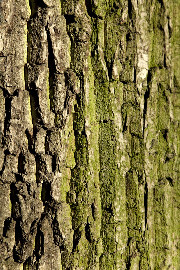 photo series, chapter trees for book 2, chapters 1-10, tree bark collection, Charlie Alice Raya