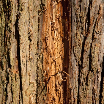 photo series, chapter trees for book 1, chapter 1-10, tree bark collection, Charlie Alice Raya