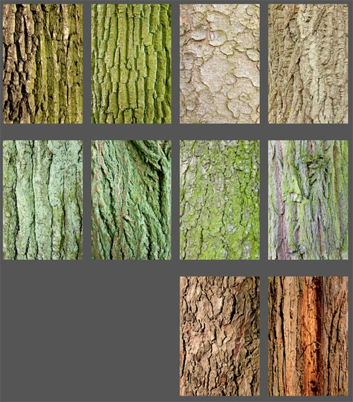 chapter trees, complete set, by Charlie Alice Raya
